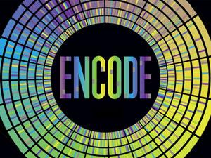 ENCODE项目